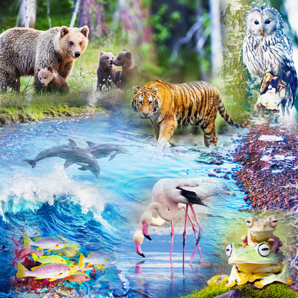 A collage with images of the Wildlife 2 pack