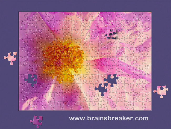 A free jigsaw puzzle from BrainsBreaker: a rock rose in full blooming