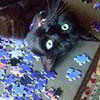 Some fun stuff about cats and jigsaw puzzles