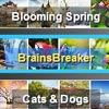 Announcing the new version 5.8 of BrainsBreaker jigsaw puzzles