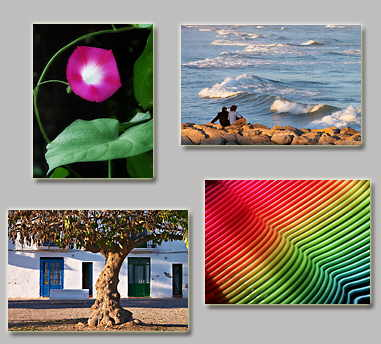 thumbnails of the puzzles Puzzles: Looking waves, Fuchsia, Color tones and Tree on a street (81-82)