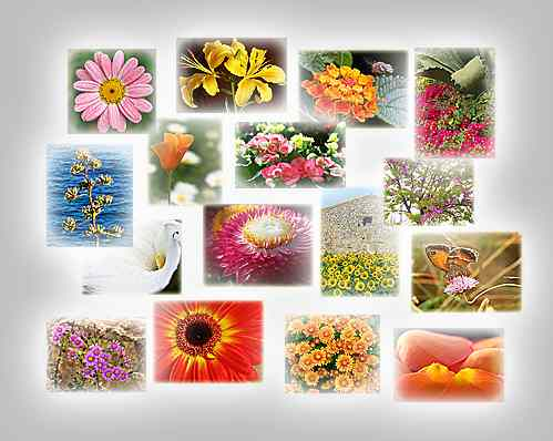 thumbnails of the puzzles Puzzles: Century plant, Sunflowers and house, Red gerbera, Drops on lily, Petals, Begonia, Pink and stone, Aloe and friends, Calm daisy, Crowd, Back light, Tulip, Thistle, Lantana and bee, Butterfly on pink