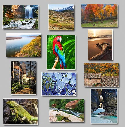 thumbnails of the puzzles Puzzles: Brook, Arches, Trunk at shore, Calm water, Blue world, Warm days coming, Tiled roof, Dreamy waterfall, Half light, Iguana, Grazing in fall, Painted parrot